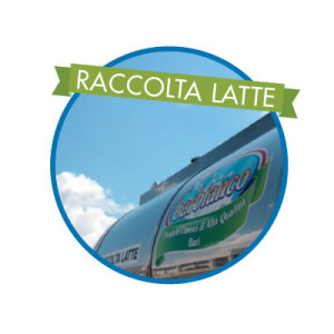 Raccolta Latte
